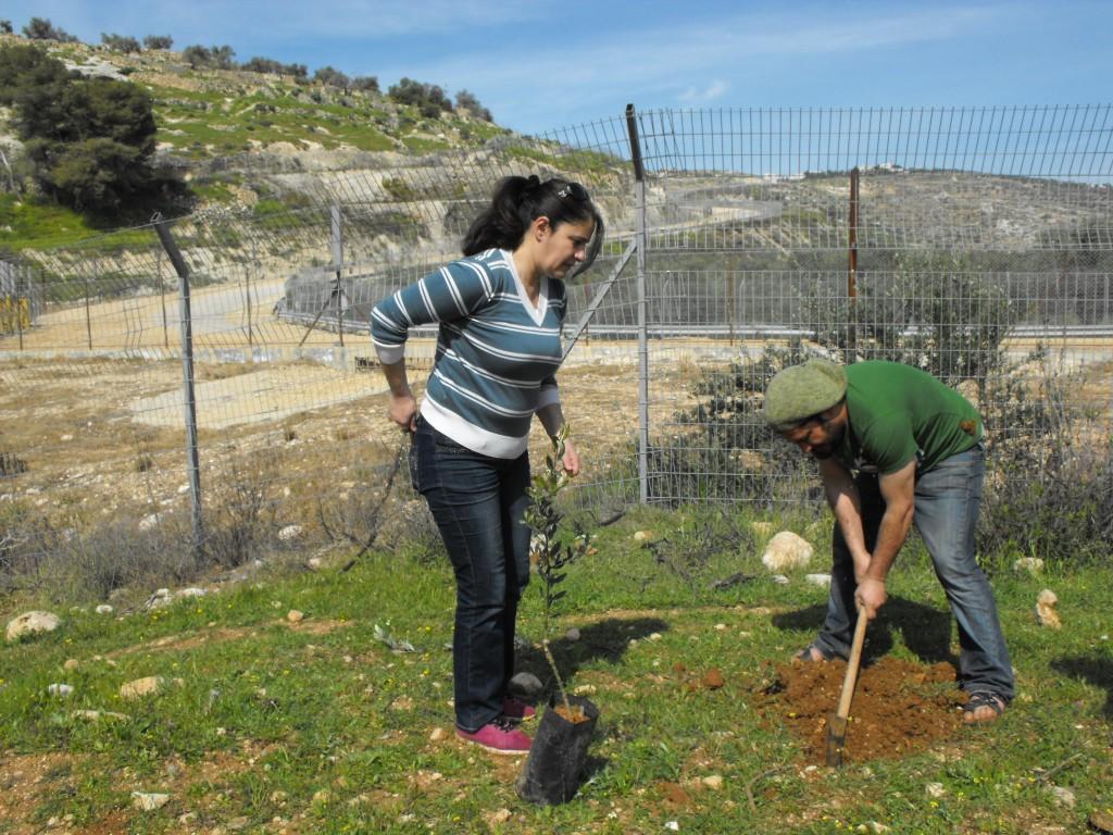 Olijfbomen planten in actie!